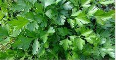 5 dias para você emagrecer e limpar fígado e rins com este maravilhoso remédio caseiro!   Cura pela Natureza