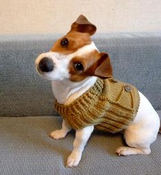 Mesmerizing Training Your Dog Proven, Useful Hints And Tips Ideas. Remarkable Training Your Dog Proven, Useful Hints And Tips Ideas. Dog Sweater Pattern, Knit Dog Sweater, Cat Sweaters, Dog Pattern, Animal Gato, Crochet Amigurumi, Pet Clothes, Dog Clothing, Jack Russell Terrier