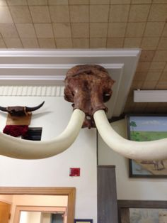 SDSM&T Museum of Geology  #HiFromSD #BlackHills #RapidCity