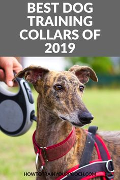 Looking for the best dog training collar? We've evaluated and compared five products, provided a buying guide, and answered some common questions. Off Leash Dog Training, Dog Training Bells, Dog Training Classes, Dog Training Techniques, Best Dog Training, Training Collar, Best Bark Collar, Bark Collars For Dogs, Family Friendly Dogs