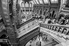 Natural History Museum - Pinned by Mak Khalaf City and Architecture B&WLondonNatural History MuseumWide Angle by TomKirkwood