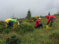 The crew working hard! - Weed Rodeo 2014 #mtsthelens