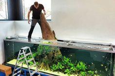 Oliver Knott working on a massive aquarium Saltwater Aquarium Setup, Wall Aquarium, Aquarium Terrarium, Home Aquarium, Nature Aquarium, Aquarium Lighting, Aquarium Design, Aquarium Fish Tank, Planted Aquarium