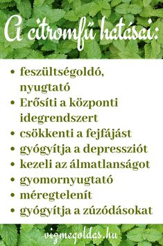 Nature's Pharmacy - The Effect of Lemon Balm Source by vizmegoldas Health 2020, Lemon Balm, Medicinal Plants, Massage Therapy, Summer Drinks, Eating Well, Good To Know, Natural Health, At Home Workouts