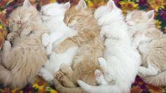 Kittens Kids Sleeping