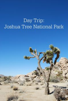 Day trip ideas for Joshua Tree National Park with Kam of Campfire Chic. Stops at Quail Springs Picnic Area, Keys View, Crossroads Cafe, and more.