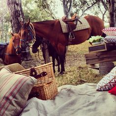 Horses and picnics by the King River in Oxley, Victoria. Victoria Australia, Picnics, King, Horses, River, Engagement, Adventure, Places, Engagements