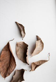 leaves//