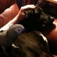 Bird and dog ... Caesar & Brutus !