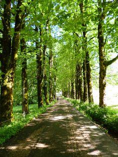 Chemin de la Correrie au monastère de la Grande #Charteuse