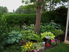 my hosta bed