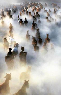 Wild Horses, Kaya, Muğla, Turkey::