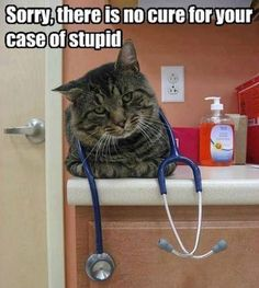 How I feel about some owners that bring their animals to my clinic. Lol