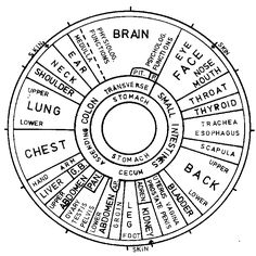Iridology- the study of the correlation of the iris and body