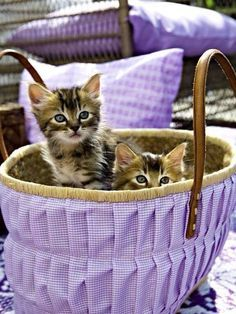 A Pair of Kitties in a Basket covered in Lavender Gingham ....