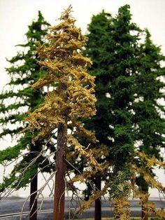 Tutorial for making trees #modeltraintablehowtomake