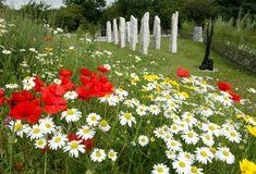 wildflower garden   Wildflower garden ideas Wild Flower Garden