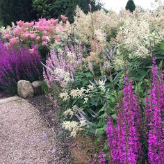 #colouryourgarden #garden #gardendesign #plants #instagood #planting #tuin #planten #jardin #northyorkshire #opengardens A zingy border we made three years ago....now doing its thing. Lythrum Robert in the foreground, followed by Persicaria polymorpha mixed with Veronicastrum Lavendelturm, then Lythrum repeated backed by Filipendula ventusa rubra