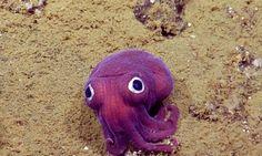 Cientistas descobrem maravilhosa criatura de olhos arregalados no Pacífico
