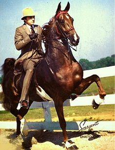 Imperator, one of the most famous and beautiful saddlebred stallions!