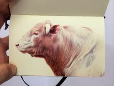 Artist Nicolas V. Sanchez fills entire sketchbooks with drawings of the world around him rendered in precise color ballpoint. Portraits of families page by page, sprawling scenes of rugged farms and livestock, and near photographic recollections of people and places from residencies in the Dominican