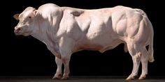 tim-flach-animal-photographer-representatives-international-hamburg-germany-severin-wendeler-SW-photo-reps-0072