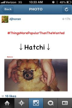 Hatchi :) super cute Zayn and Perrie's pups One Direction Girlfriends, One Direction Humor, One Direction Pictures, Zane Malik, Back Photos, Cher Lloyd, British Boys, One Day I Will, Love To Meet
