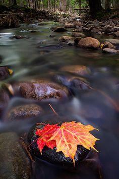 Autumn Prelude - Acadia National Park, Maine