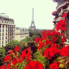 Beautiful bloom in Paris
