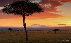 Image result for masai mara