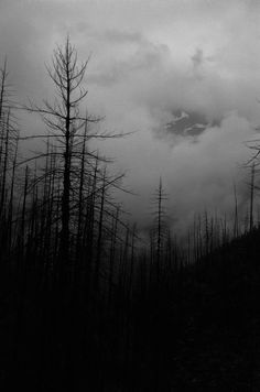 Words of Wisdom by Daisaku Ikeda Black Metal, Black And White, Dead Forest, Dark Landscape, Dark Photography, Dark Matter, Dark Places, Dark Wood, Dark Art