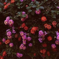 @fparizona feeling floral