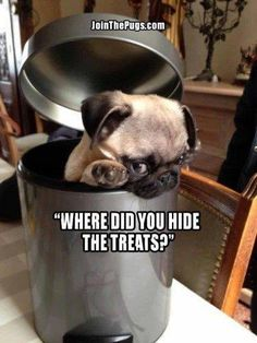 Where did you hide the treats?