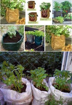 Выращиваем картофель в...мешке - Садоводка   САД, ОГОРОД, ДАЧА, ПОДВОРЬЕ...   Постила