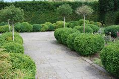 boxwoods and topiaries