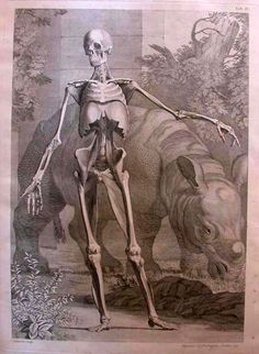 Dance of Death - skeleton and rhino