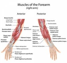 3 Wrist Strengthening Exercises to Prevent Yoga Injuries   Breaking Muscle