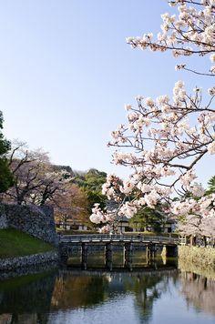 Hikone  #shiga #japan #biwako #gobiwako #日本 #滋賀県 #琵琶湖