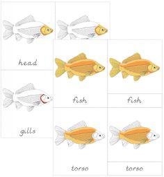 The Helpful Garden: Parts of the Fish Nomenclature Cards Montessori Science, Montessori Practical Life, Montessori Education, Montessori Classroom, Science Activities For Kids, Preschool Themes, Preschool Science, Montessori Materials, Life Science