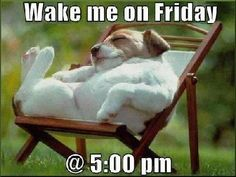 Wake me on Friday quotes quote friday funny quotes days of the week thursday quotes