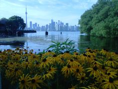 View from Toronto Island. Summer '11.