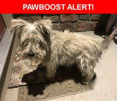 Is this your lost pet? Found in Colorado Springs, CO 80911. Please spread the word so we can find the owner!    Nearest Address: San Mateo Drive, Colorado Springs, CO, United States