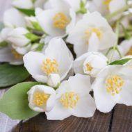 Hrean, ghimbir si lamaie: elixirul fabulos care topeste grasimea abdominala in doar 3 saptamani - Frunza Verde Good To Know, Natural Remedies, Avocado, Rose, Nature, Flowers, Mai, Medicine, Green