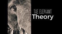 The Elephant Theory - Archer Ward Media Elephant, Videos, Elephants