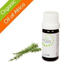 Escentia Rosemary (Rosmarinus officinalis) Organic Essential Oil