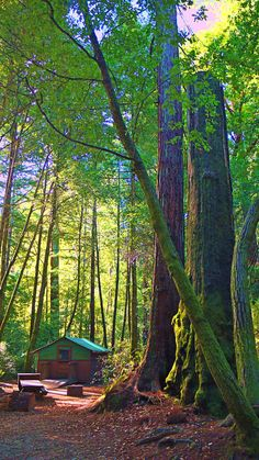 Romantic cabins under the redwoods @ Big Basin State Park, CA, Santa Cruz Mountains Camping Glamping, Luxury Camping, Camping Trailers, Camping Stove, Big Basin Redwoods, Santa Cruz Camping, Camping Cornwall, Lake George Village, California Dreamin'