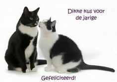 Day Wishes, Happy Animals, Birthday Cards, Humor, Cats, Funny, Cartoons, Facebook, Quotes