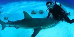 'Shark Week' Host Eli Roth on Why He Does not Fear the Great Whites - http://www.movienewsguide.com/shark-week-host-eli-roth-on-why-he-does-not-fear-the-great-whites/72954
