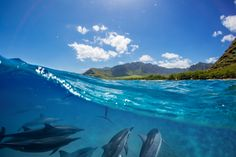 Find a selection of the most beautiful paradise islands you should visit in Palawan Maldives French Polynesia Seychelles. Palawan, Paradise Island, Island Life, New Zealand Wildlife, Voyage Reunion, Base Nautique, Little Corn Island, Lake Nicaragua, Les Seychelles