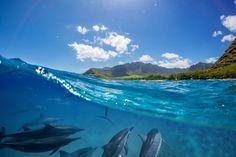 Find a selection of the most beautiful paradise islands you should visit in Palawan Maldives French Polynesia Seychelles. Palawan, Paradise Island, Island Life, Maldives, New Zealand Wildlife, Voyage Reunion, Base Nautique, Lake Nicaragua, Les Seychelles